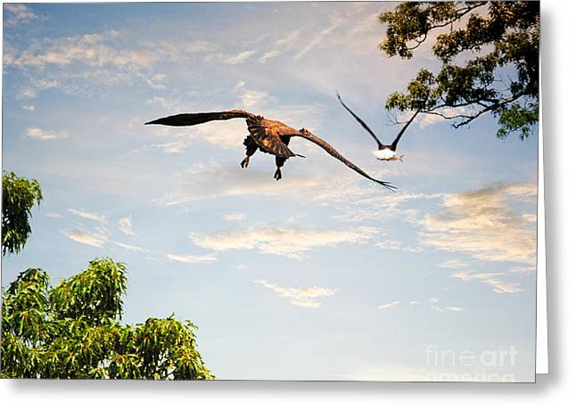Eaglet Greeting Cards - Following the Fish Greeting Card by Jai Johnson
