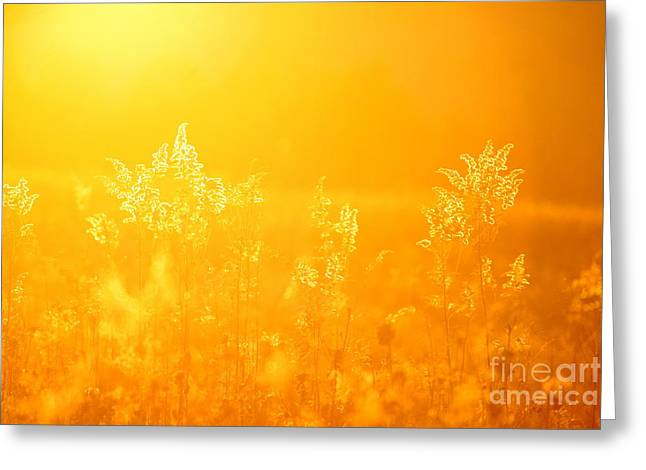 Landscape Photography Greeting Cards - Following the Light  Greeting Card by Neal  Eslinger