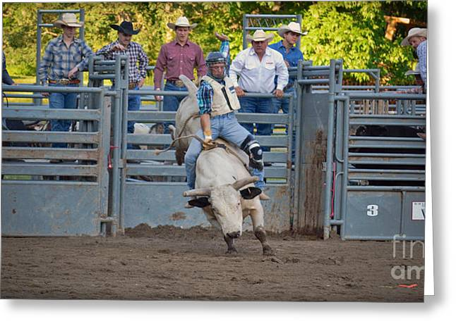 Rodeo Greeting Cards - Fool Of Bull Greeting Card by Gary Keesler