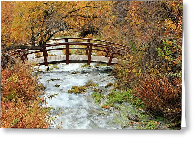 Autumn Splendor Greeting Cards - Foot bridge at Cascade Springs. Greeting Card by Johnny Adolphson