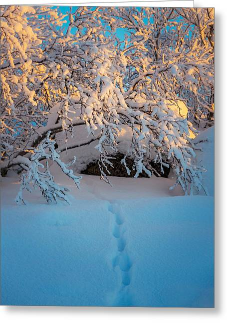 S Landscape Photography Greeting Cards - Foot Prints And Trees In The Frozen Greeting Card by Panoramic Images