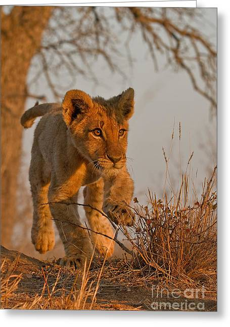 Footloose Greeting Card by Ashley Vincent