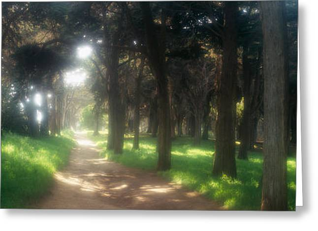 The Trees Greeting Cards - Footpath Passing Through A Park, The Greeting Card by Panoramic Images