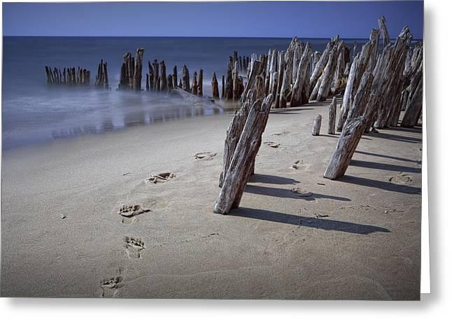 Randy Greeting Cards - Footprints along the Beach on Lake Michigan Greeting Card by Randall Nyhof