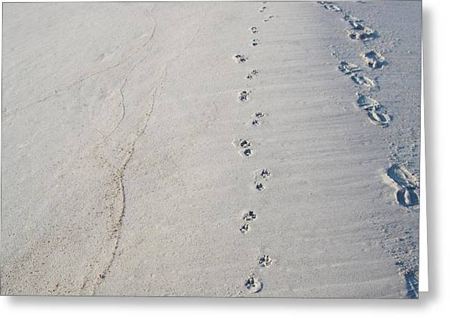 Footprints and Pawprints Greeting Card by Diane Macdonald