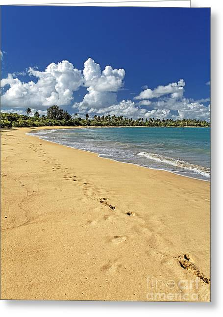 Footprints In The Sand Greeting Cards - Footprints in the Sand Greeting Card by George Oze