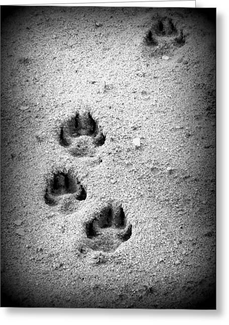 Annapolis Valley Greeting Cards - Footprints in the Sand Greeting Card by Karen Cook
