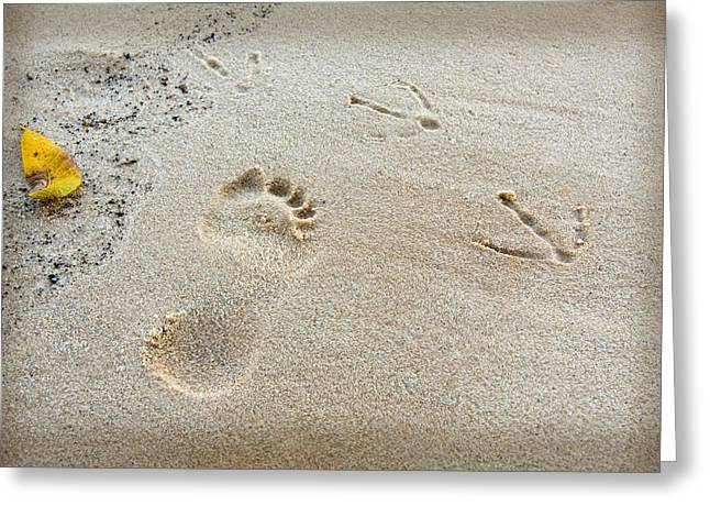 Bird Footprints In The Sand Greeting Cards - Footprints in the Sand Greeting Card by Melinda Fawver