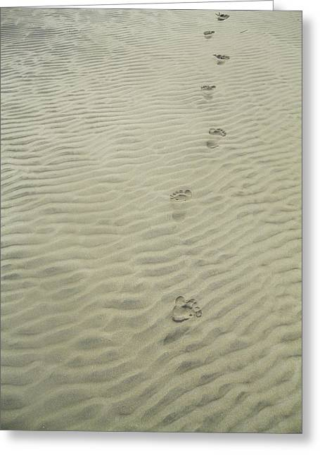 Beach Photograph Pyrography Greeting Cards - Footprints In The Sand Greeting Card by Olivia CLover