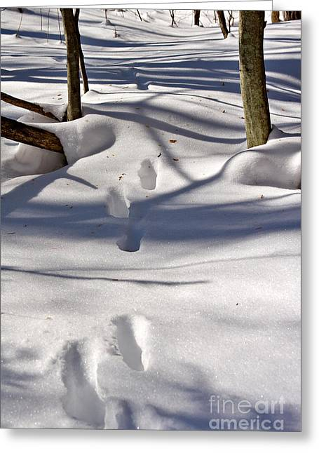Drifting Snow Photographs Greeting Cards - Footprints in the snow Greeting Card by Louise Heusinkveld