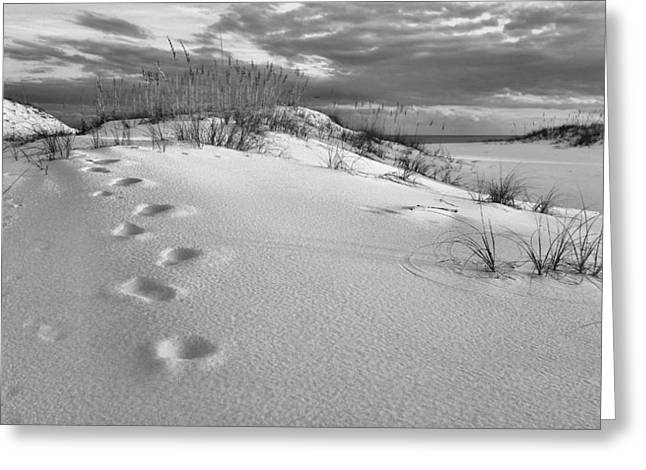 Sea Oats Greeting Cards - Footprints Greeting Card by JC Findley