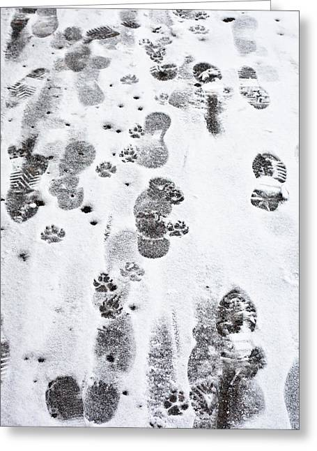 Animal Paw Print Greeting Cards - Footprints Greeting Card by Tom Gowanlock
