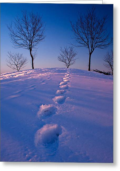 Winter Scene Photographs Greeting Cards - Footsteps Greeting Card by Cale Best