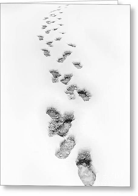 Storm Prints Greeting Cards - Footsteps in Snow Greeting Card by Dan Carmichael