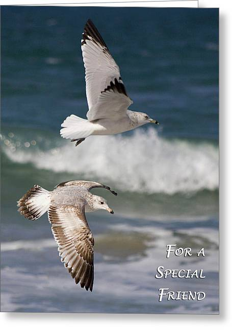 Wildlife Celebration Greeting Cards - For a Special Friend Greeting Card by Dawn Currie