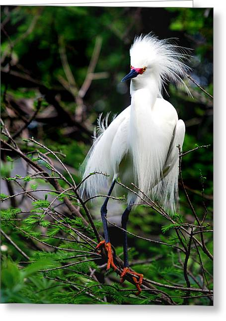 Photos Of Birds Greeting Cards - For Mating Or Fighting Greeting Card by Skip Willits