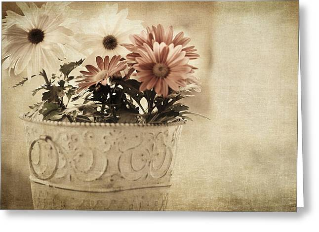 Soft Light Greeting Cards - For the Love of Gerberas Greeting Card by Bonnie Bruno
