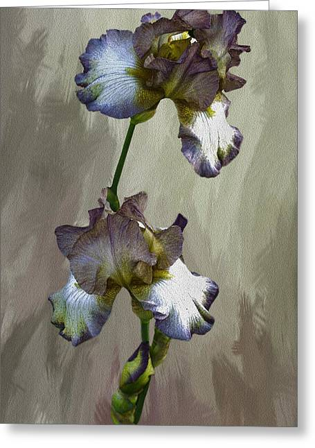 Spring Bulbs Greeting Cards - For The Love Of Iris Greeting Card by Diane Schuster