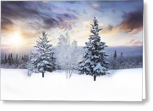 Winter Trees Greeting Cards - For the Love of Winter Greeting Card by Amber Fite