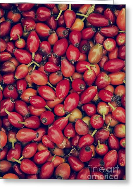 Foraging Greeting Cards - Foraged Rosehips  Greeting Card by Tim Gainey
