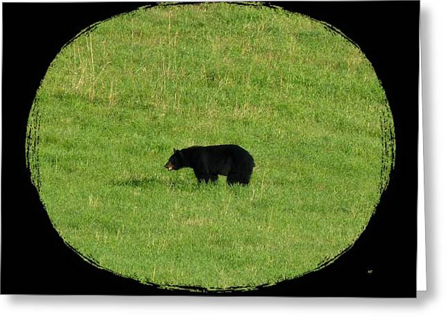 Intrigue Greeting Cards - Foraging Black Bear Greeting Card by Will Borden