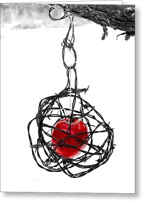Cage Greeting Cards - Forbidden Fruit Greeting Card by Aaron Aldrich