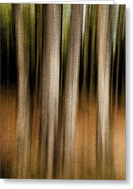 Gatineau Park Greeting Cards - Forest Abstract. Foursome Greeting Card by Rob Huntley