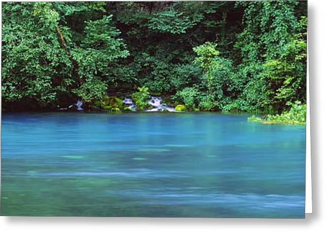 Ozark Greeting Cards - Forest At The Riverside, Big Spring Greeting Card by Panoramic Images