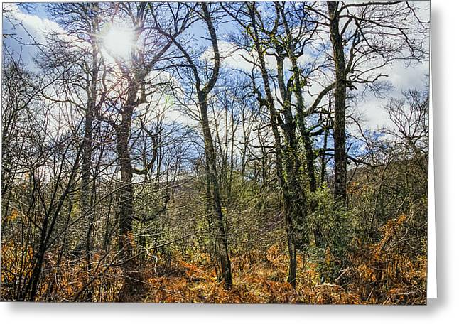 Green Day Greeting Cards - Forest beauty Greeting Card by Tilyo Rusev