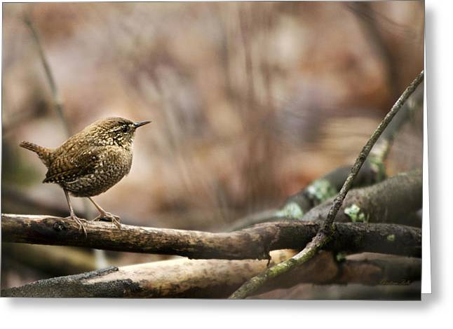 Forest Bird Greeting Cards - Forest Birds Winter Wren Greeting Card by Christina Rollo