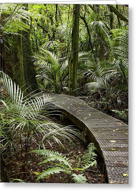 Adventure Photographs Greeting Cards - Forest boardwalk Greeting Card by Les Cunliffe