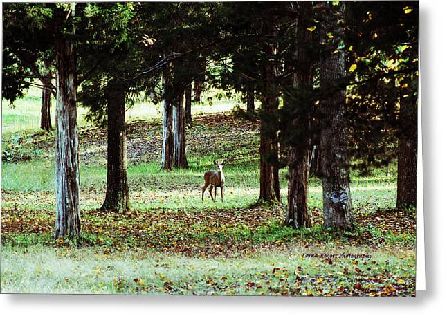 Indiana Landscapes Pyrography Greeting Cards - Forest Buck Greeting Card by Lorna Rogers Photography
