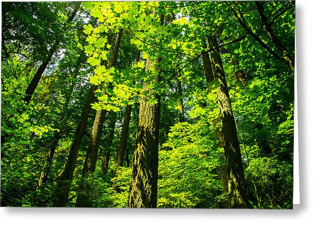 Lush Green Greeting Cards - Forest Canopy Greeting Card by Kunal Mehra