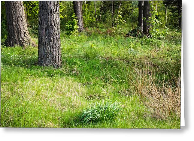 Background Greeting Cards - Forest clearing Greeting Card by Tom Gowanlock
