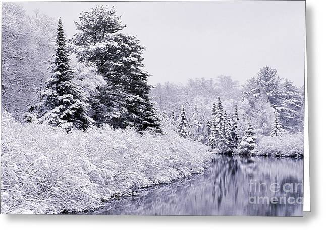 Reflections Of Trees In River Photographs Greeting Cards - Forest Covered With Snow Greeting Card by Rod Planck