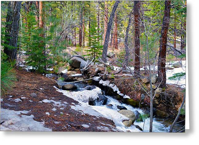Forest Creek 4 Greeting Card by Brent Dolliver