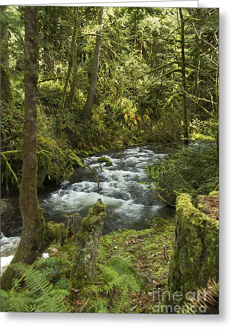 Dappled Light Greeting Cards - Forest Creek Greeting Card by Jeanette French