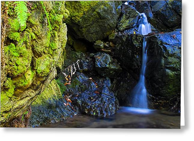 Marin County Greeting Cards - Forest Creek Greeting Card by Radek Hofman