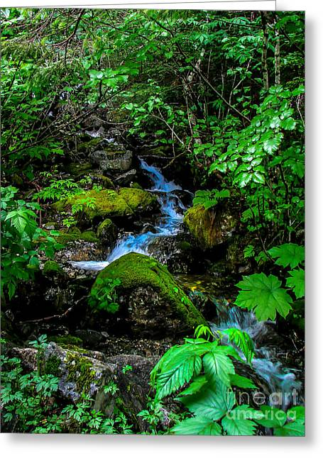 Picturesqueness Greeting Cards - Forest Creek Greeting Card by Robert Bales