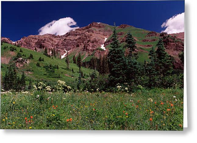Crested Butte Greeting Cards - Forest, Crested Butte, Gunnison County Greeting Card by Panoramic Images