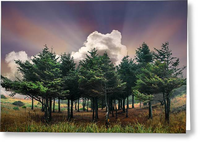Forest Dawn Greeting Card by Debra and Dave Vanderlaan