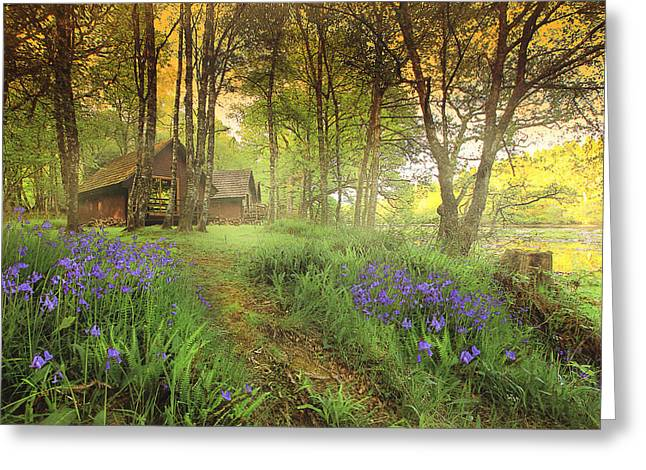 Highlands Of Scotland Greeting Cards - Forest Dream Greeting Card by Roy  McPeak