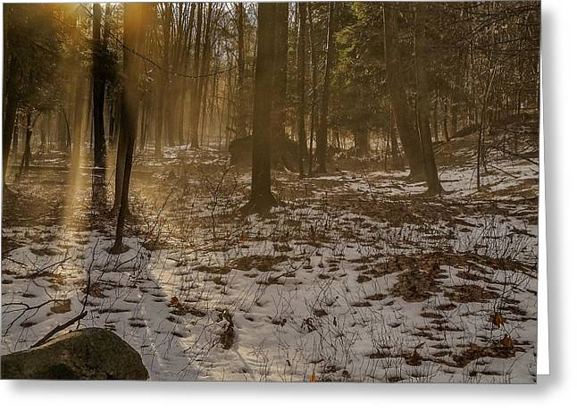 Misty Photographs Greeting Cards - Forest dreams Greeting Card by Chris Bordeleau