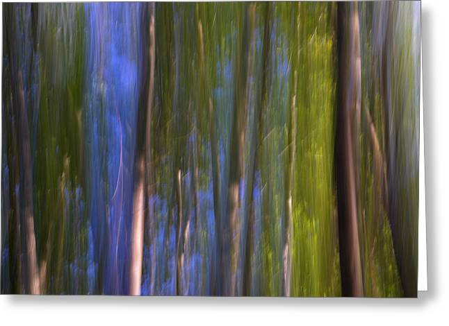 Forest Dreams Greeting Card by Guido Montanes Castillo