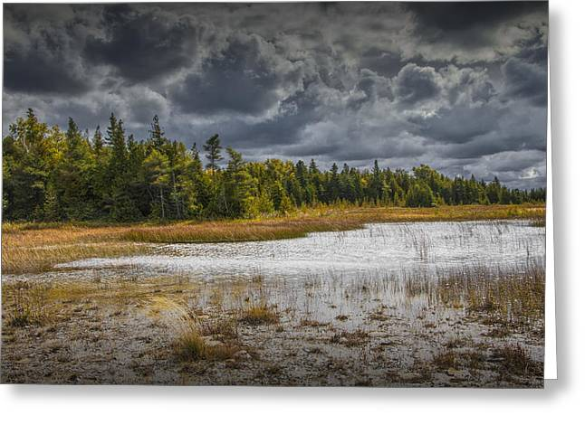 Sturgeon Greeting Cards - Forest Edge on Waugoshance Point Greeting Card by Randall Nyhof