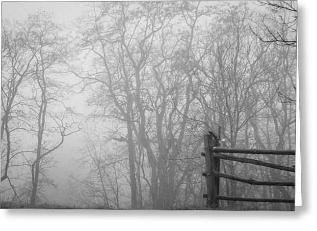 Deutschland Greeting Cards - Forest Entryway Greeting Card by Miguel Winterpacht