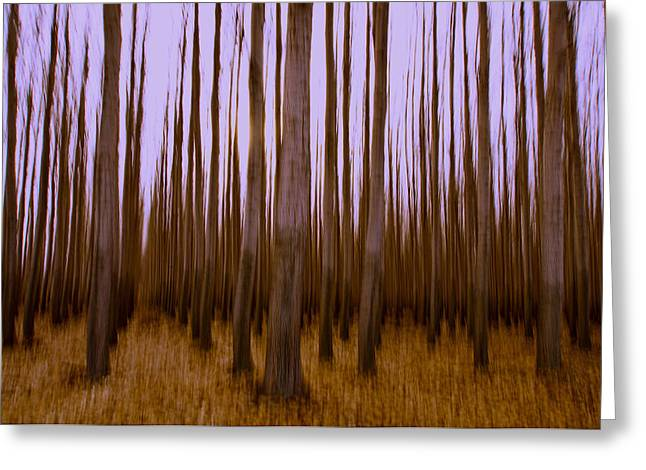 Forest Escape Greeting Card by Dan Mihai
