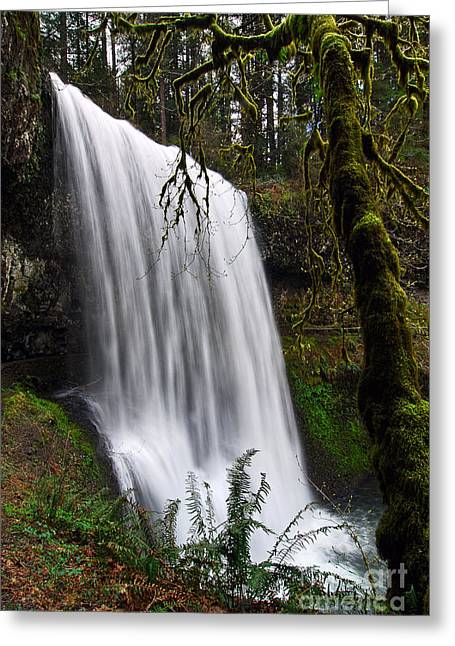 Recesses Greeting Cards - Forest Falls - Waterfall in the Silver Falls State Park in Oregon Greeting Card by Jamie Pham