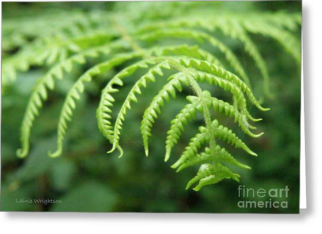 Forest Fern Greeting Card by Lainie Wrightson