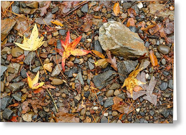 Arkansas Greeting Cards - Forest Floor Beavers Bend State Park Oklahoma Greeting Card by Silvio Ligutti